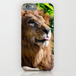 Lion sticking out his tongue iPhone Case