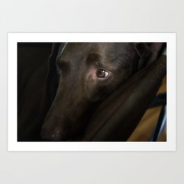 My Friend Chocolate Lab Art Print