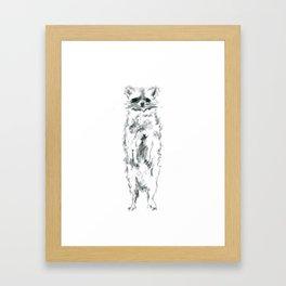 Wild Racoon Framed Art Print