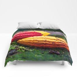 Cocoa Colours Comforters