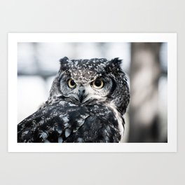 Spotted Eagle-Owl Art Print