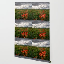 Brighten the Day - Indian Paintbrush Wildflowers in Eastern Oklahoma Wallpaper