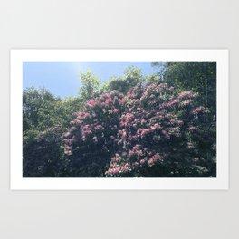 Rhododendron 2 Art Print