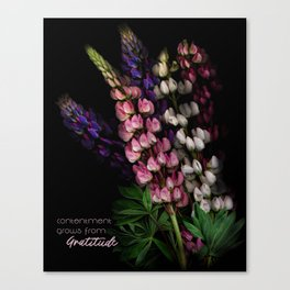 Contentment Grows from Gratitude Canvas Print