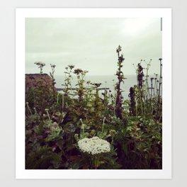 Halfmoon Bay wildflowers Art Print