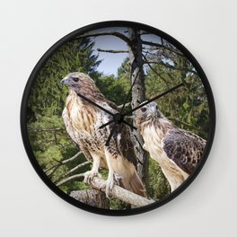 Pair of Red-tail Hawks in West Michigan Woodland Wall Clock