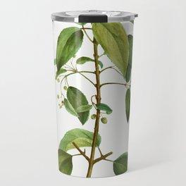 Maqui (Aristotelia Maqui) from Traite des Arbres et Arbustes que lon cultive en France en pleine ter Travel Mug