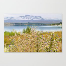 Field of Lupines Canvas Print