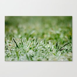 Icy Grass Canvas Print