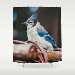 Blue Jay (Color) Shower Curtain