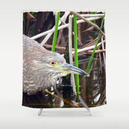 Juvenile Black Crowned Night Heron Shower Curtain