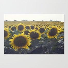 SUNFLOWER_1 Canvas Print