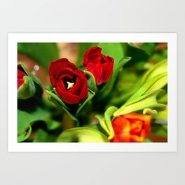 rubeum tulips Art Print