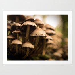 Woodland Fungi Art Print