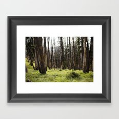 YELLOWSTONE FOREST Framed Art Print
