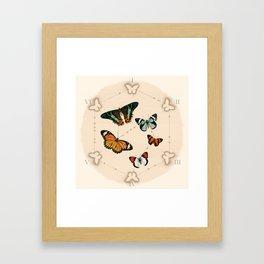 Wings in the Spotlight Framed Art Print