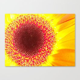 Happy Hippy Sunflower Canvas Print