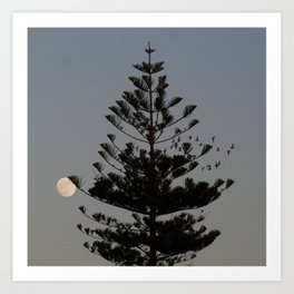 Araucaria tree, full moon, flight of birds Art Print
