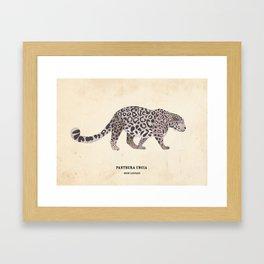Snow Leopard January 2014 Print #1 Framed Art Print