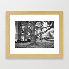 The Great Tree Framed Art Print