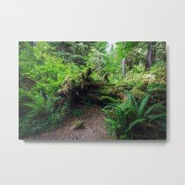 Hoh Rain Forest Metal Print