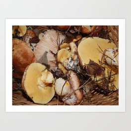 Collect mushrooms in the country in the woods Art Print
