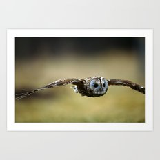 FLIGHT OF THE TAWNY OWL Art Print