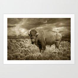 American Buffalo in Sepia Tone Art Print