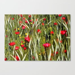 Red Poppies In A Cornfield Canvas Print
