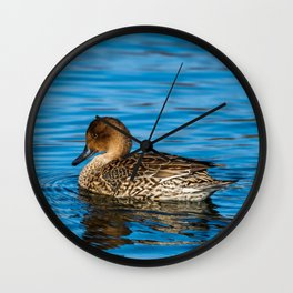 Female Northern Pintail Wall Clock