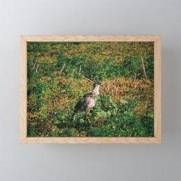 Siriema Framed Mini Art Print