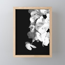 White Orchids Black Background Framed Mini Art Print