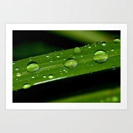 Macro shot of Rain Drops on a Plant Leave Art Print