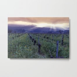 Spring Sunset Over Napa Valley, Oakville, California Metal Print