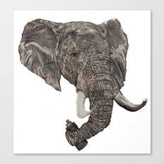 Street Elephant Canvas Print