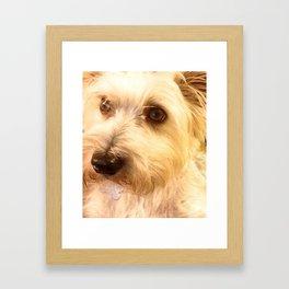 Sweet Puppy Framed Art Print