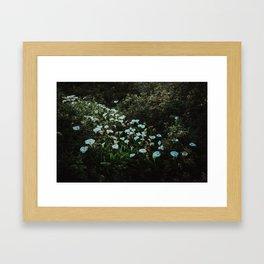 Big Sur I - Twilight Calla Lilies Framed Art Print