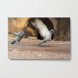 Pigeons in India Metal Print