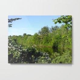 small pond Metal Print