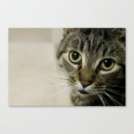 Wide Eyes Canvas Print