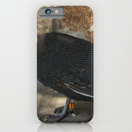 Guineafowl iPhone Case