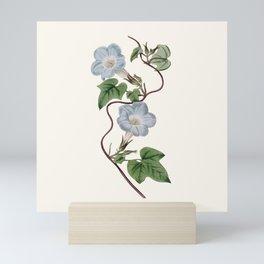 Ivy-Leaved Morning Glory Mini Art Print