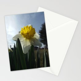 Proud Daffodil Stationery Cards