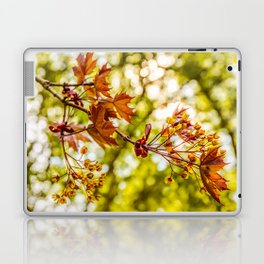 Maple blooms Laptop & iPad Skin