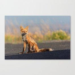 Bella the Red Fox Canvas Print