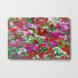 Colorful Petunia Flowers Metal Print