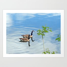 Enjoying a Swim Art Print