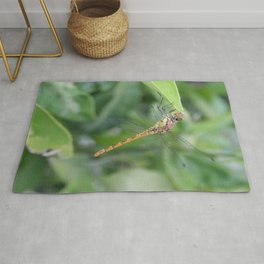 Green and Brown Dragonfly Holding On To Oleander Rug