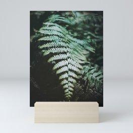 Fern Leaf on 35mm Film. Analog Nature Photography. Schwarzwald, Germany. European Travel Print. Wall Art. Mini Art Print