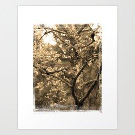 Tree of Hearts - Sepia Art Print